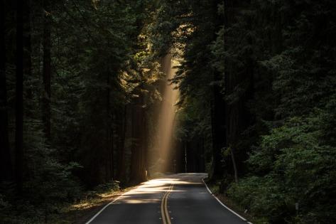 sunlit-road